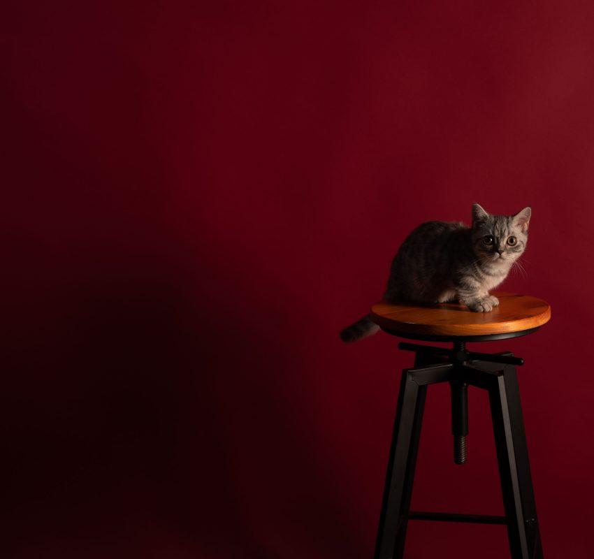 個人形象&寵物形象 台中